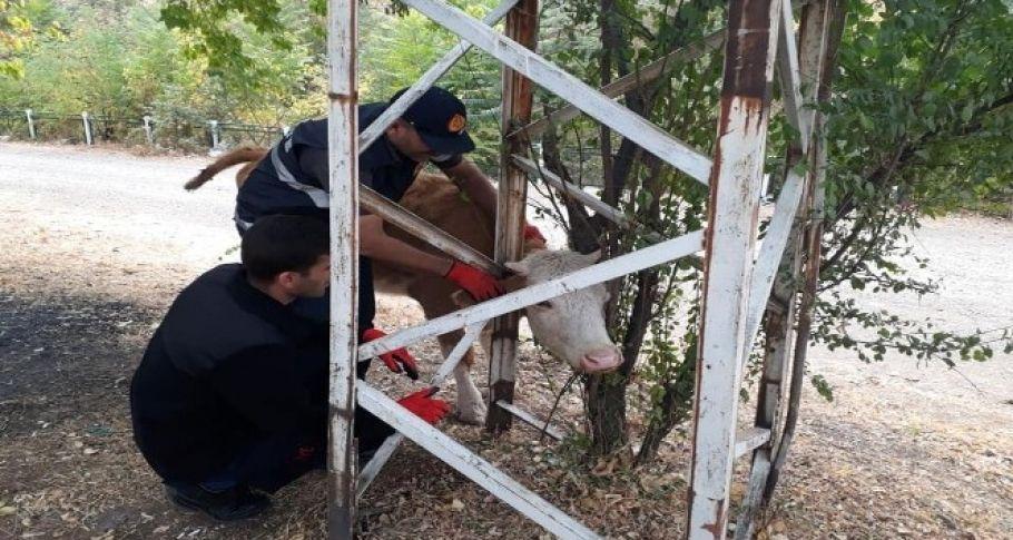 Ağaç ile direk arasına sıkışan inek kurtarıldı