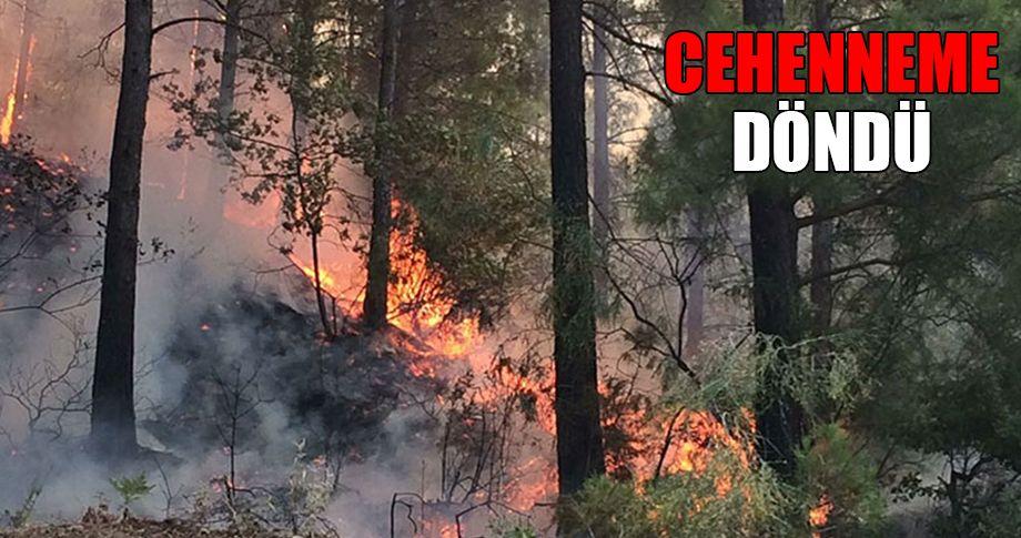 Alanya'da orman yangını!