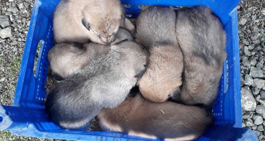 Anneleri Öldürülen 6 Köpek Yavrusuna O Sahip Çıktı