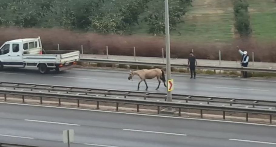Başı boş at dehşet saçtı