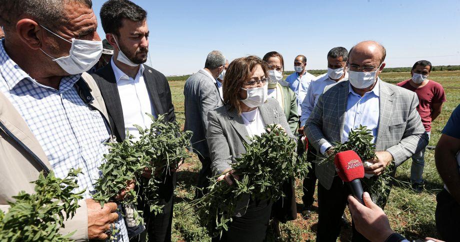 Başkan Şahin Nizip ve Karkamış'ta hasat yapan çiftçiyle buluştu
