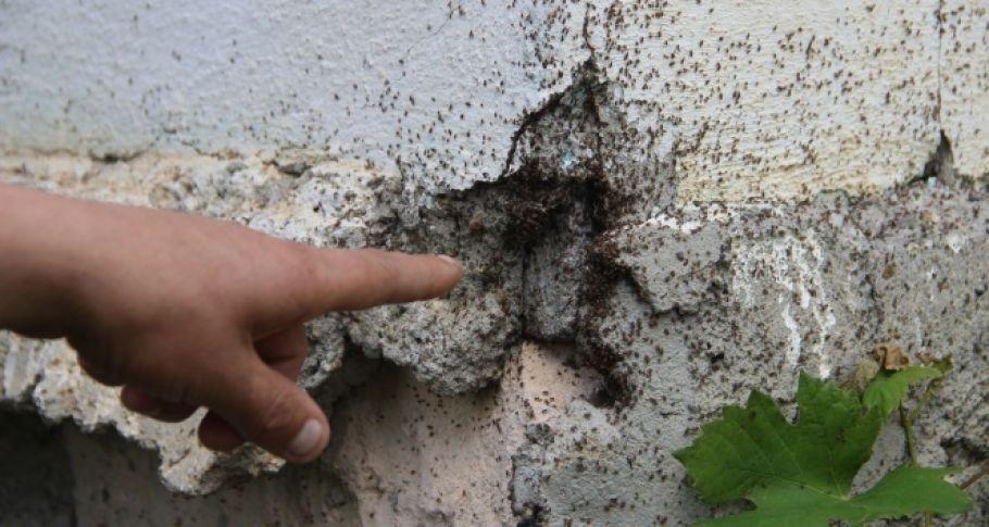 Böcek istilası başlayınca mahalleli evlerini boşalttı