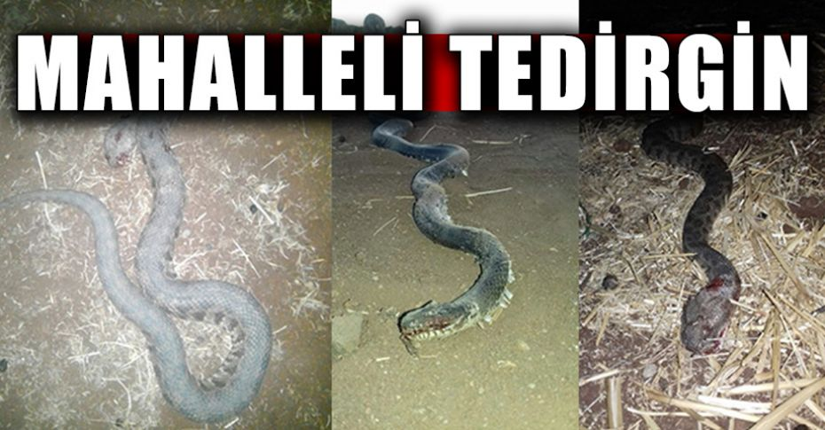 Bu köyü yılanlar bastı!
