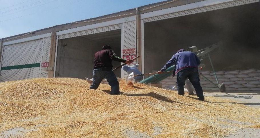 Buğdayda sektör dışı stokçular sanayicileri zorluyor
