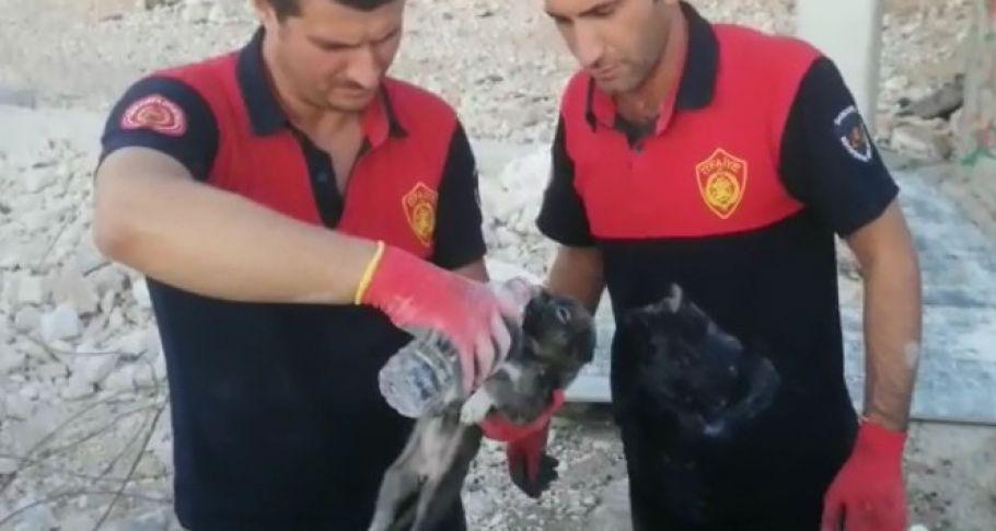 Çöken topraktan yavru köpek kurtarıldı
