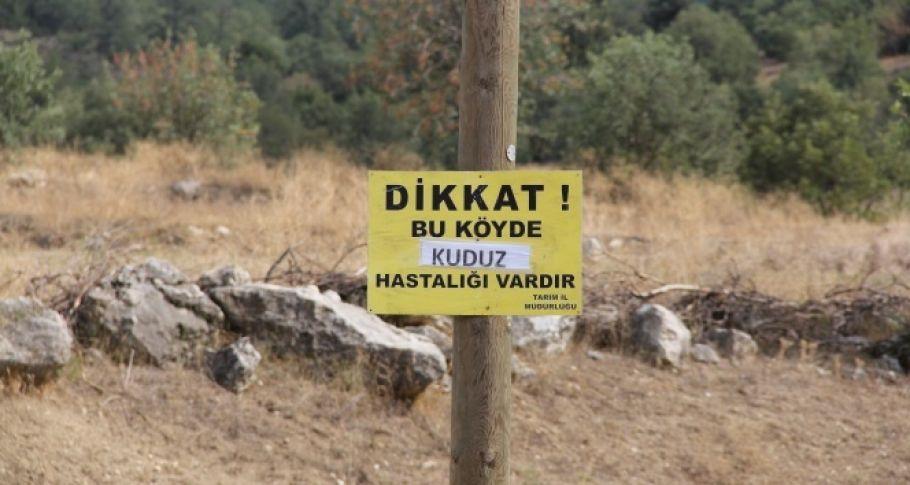 Çorum'da bir inekte görülen kuduz vak'ası köylüleri korkuttu.