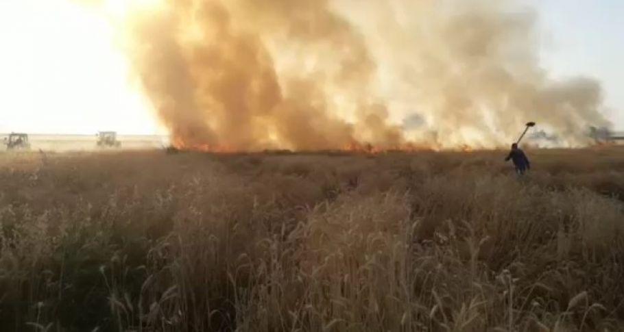 Diyarbakır'da 30 dönüm ekili arazi kül oldu