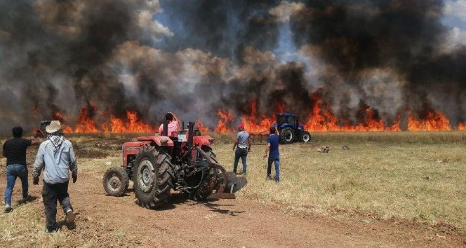 Diyarbakır'da 70 dönüm ekili arazi kül oldu