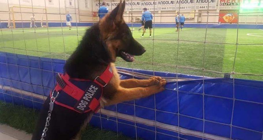 Futbol düşkünü köpek görenleri hayretler içinde bırakıyor