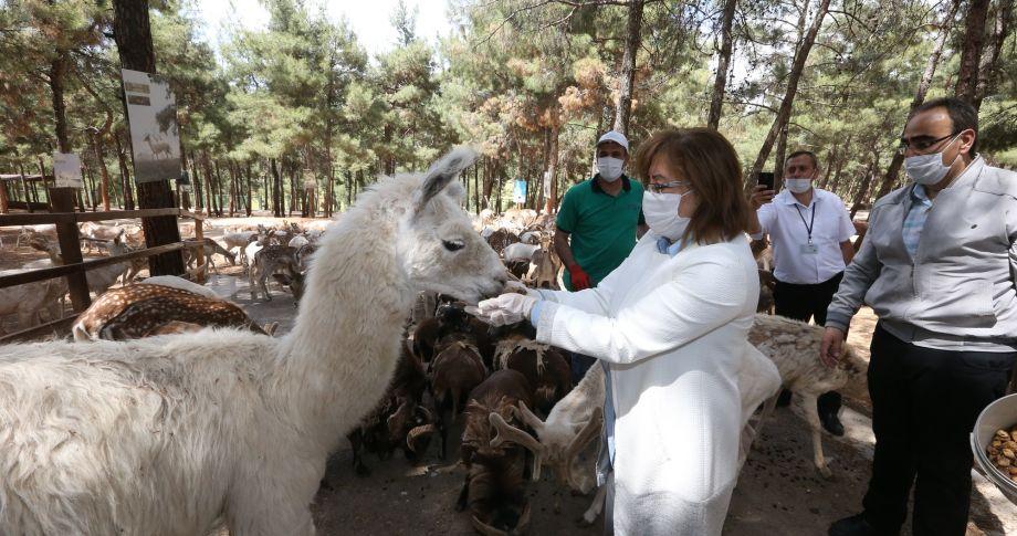 Gaziantep Hayvanat Bahçesi, Yeniden Açılışı İçin Gün Sayıyor