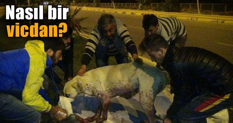 Gaziantep'te köpekleri acımadan kurşunladılar