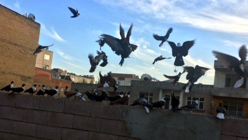 Güvercin kavgasında kan aktı: 1 ölü
