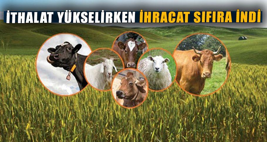 Hayvancılık ithalatında rekor artış yaşandı!