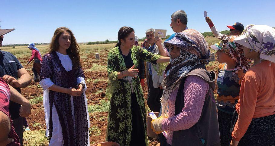 HDP Şanlıurfa Milletvekili Adayları seçim çalışmalarını sürdürüyor