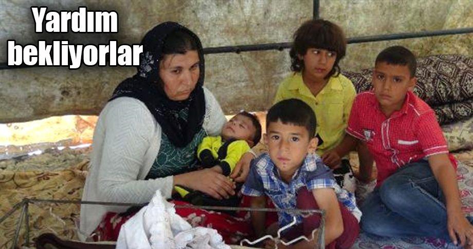 İşsiz kalan Urfalı baba, ailesiyle çadırda yaşıyor