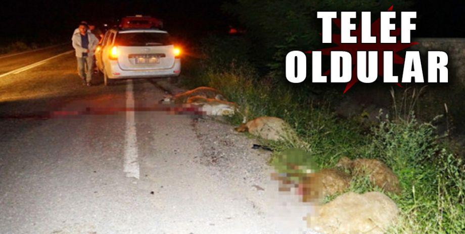Karşıya geçmeye çalışan koyun sürüsüne otomobil çarptı