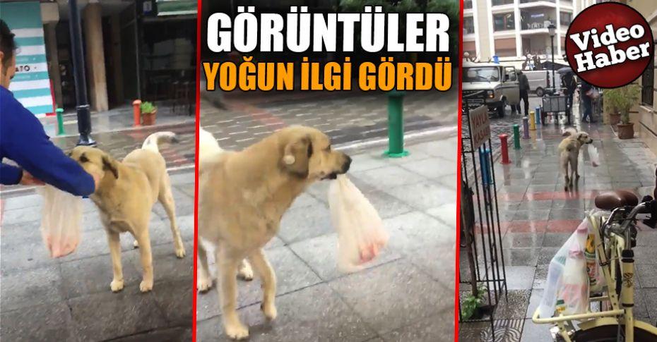Kasabın en sadık müşterisi, sokak köpeği