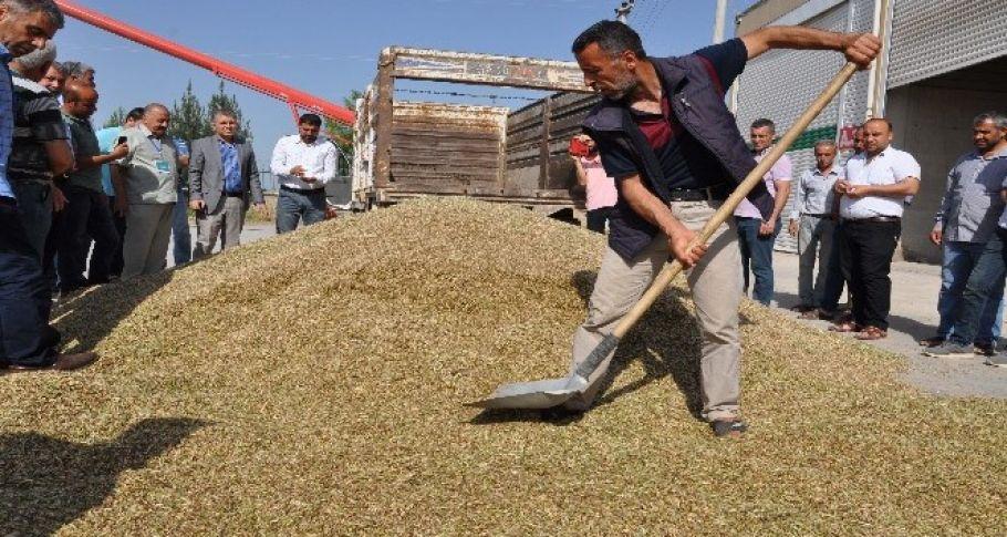 Kızıltepe'de ilk arpa hasadı başladı