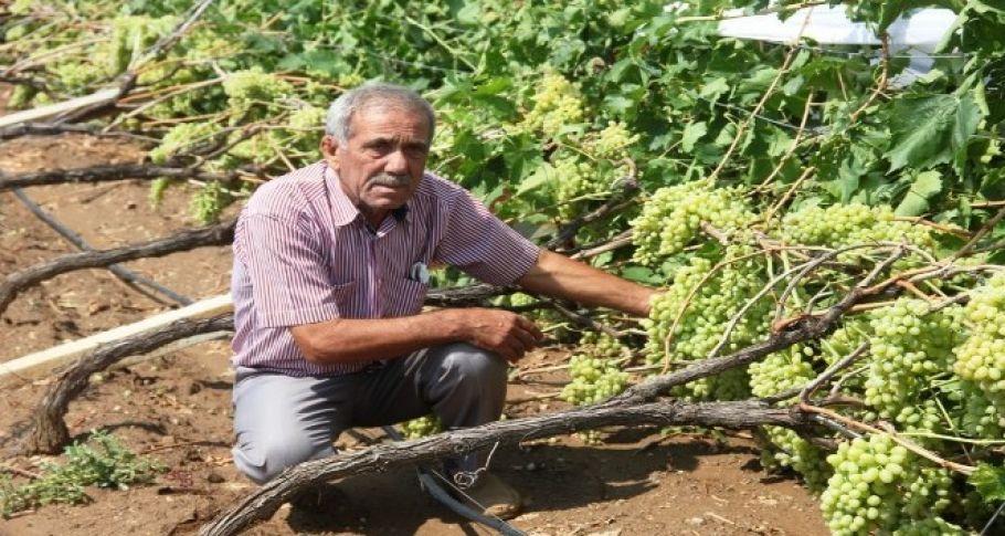 Manisa'da çiftçileri sel felaketi vurdu