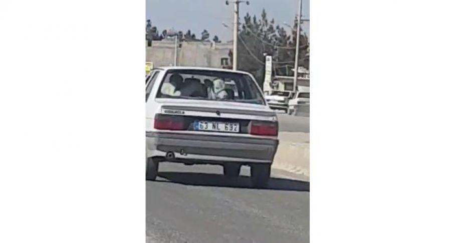 Otomobilin arka koltuğundaki ineği görenler şaşkına döndü