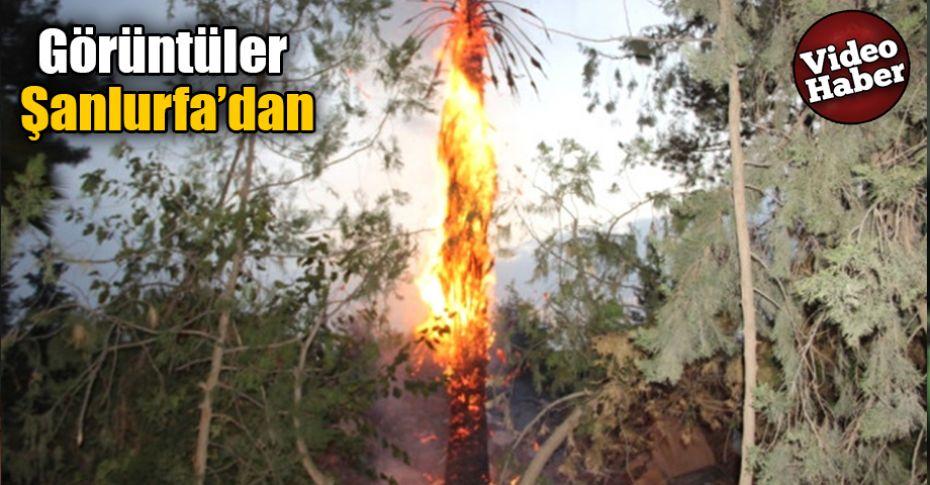 Palmiye ağacı alev alev yandı