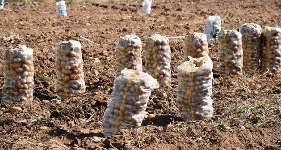 Patates ithalatında tarife kontenjanı açıldı