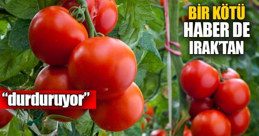 Rusya'dan sonra Irak da domates ithalatını durdurdu