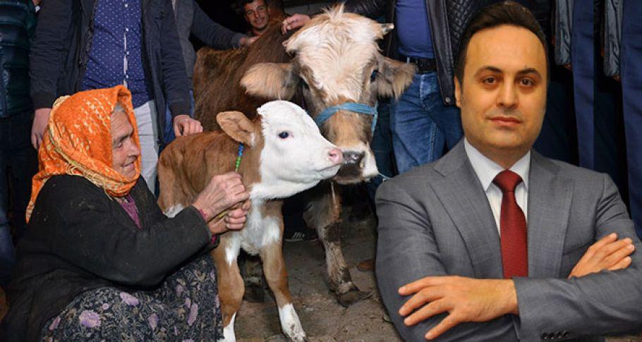 Sabiha nineye bir inek de iş adamından geldi