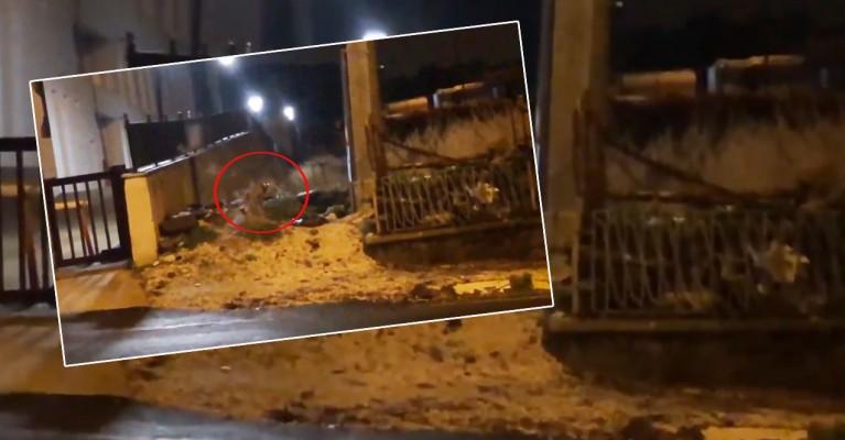 Şanlıurfa'da kent merkezine tilki indi