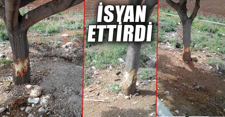 Şanlıurfa Mardin yolunda çok sayıda ağaç tahrip edildi!