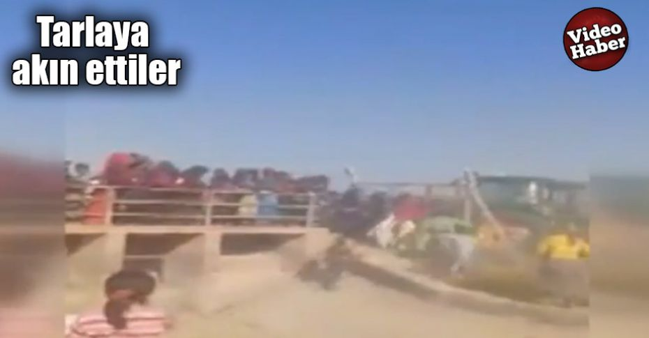 Şanlıurfa'da hasat sonrası pamuk izdihamı kamerada