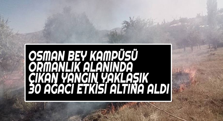 Şanlıurfa'daki ormanlık alanda yangın çıktı