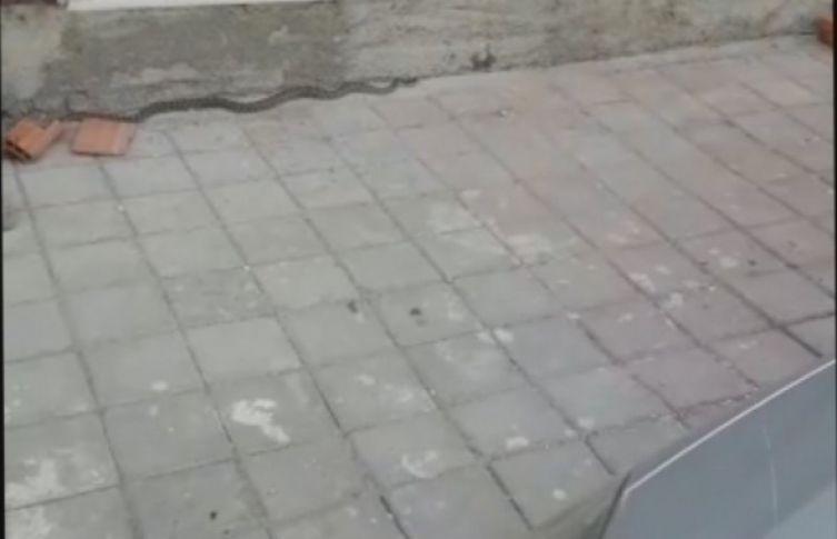Şehirde her yerden yılan fışkırıyor!