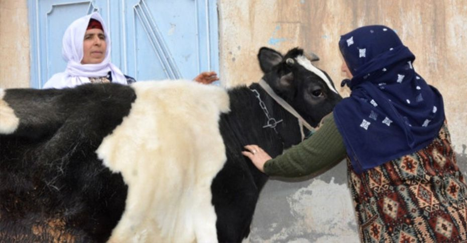 Siverek'te çalınan inek sahibine teslim edildi