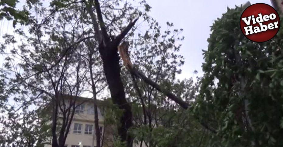 Siverek'te şiddetli fırtına ağaçları devirdi!