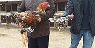 Dünyanın En Büyük Tavukları Göreni...