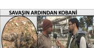 KOBANİ'DE IŞİD CESETLERİ HASTALIK SAÇIYOR...