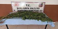 Şanlıurfa'da uyuşturucu operasyonu: 5...