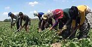 Tarım işçileri için proje başlayacak:...