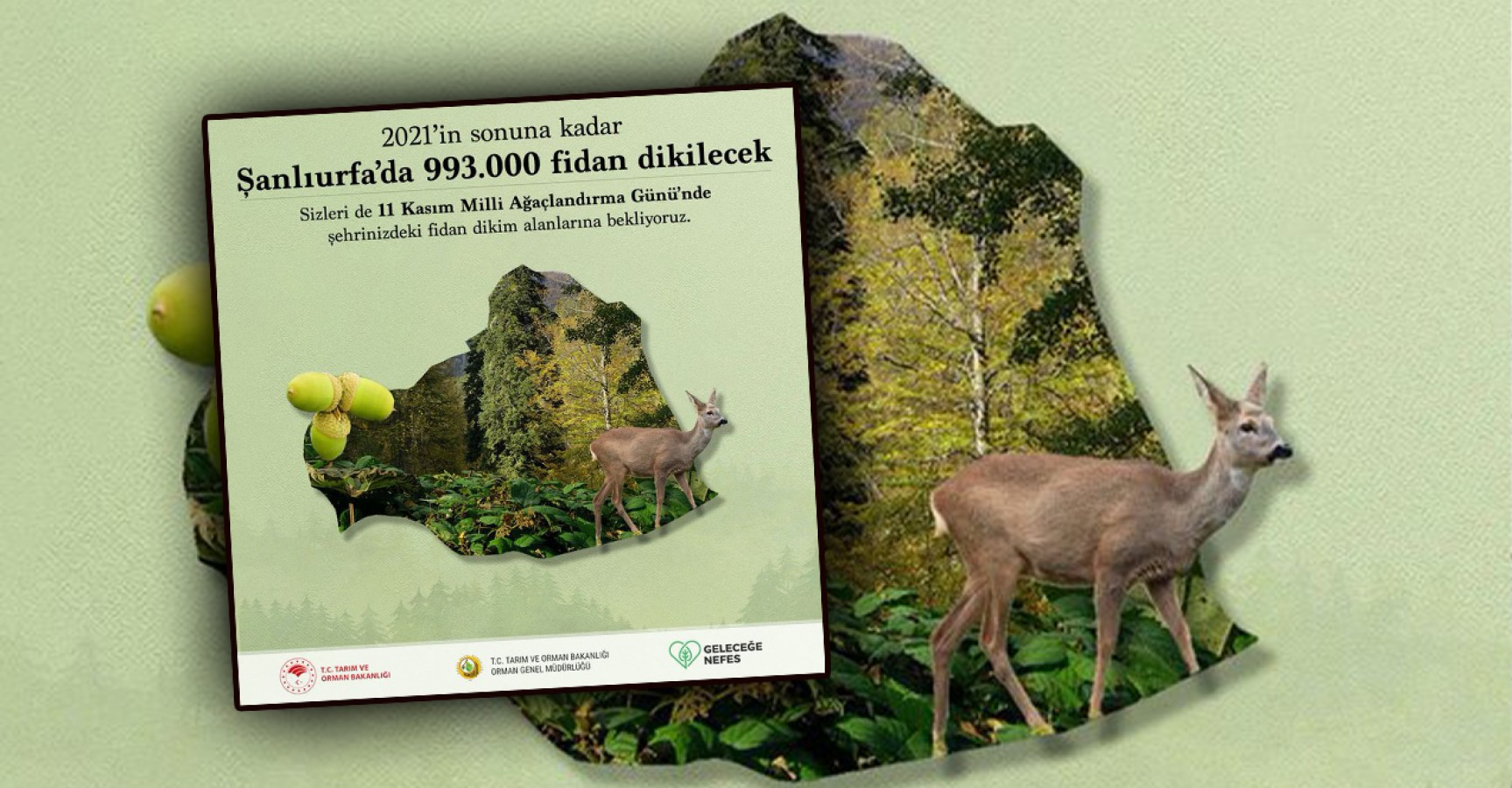 Urfa'da 993 bin fidan toprakla buluşacak
