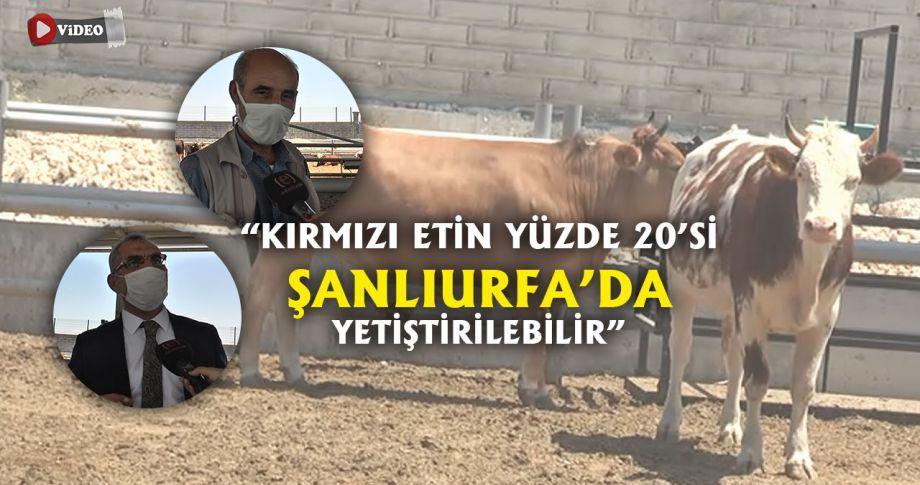 TKDK'dan aldığı destek ile çiftlik kurdu!
