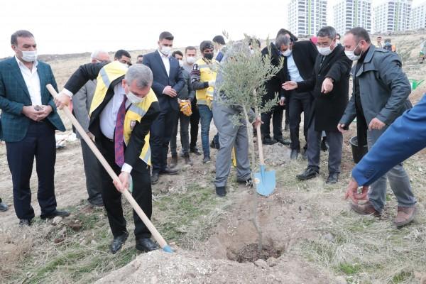Şanlıurfa'da yerleşim yerlerine ağaç dikim çalışmaları