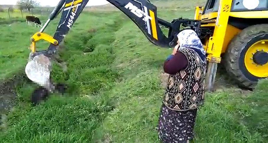 Yaşlı kadın sulama kanalında telef olan ineği için dakikalarca ağladı
